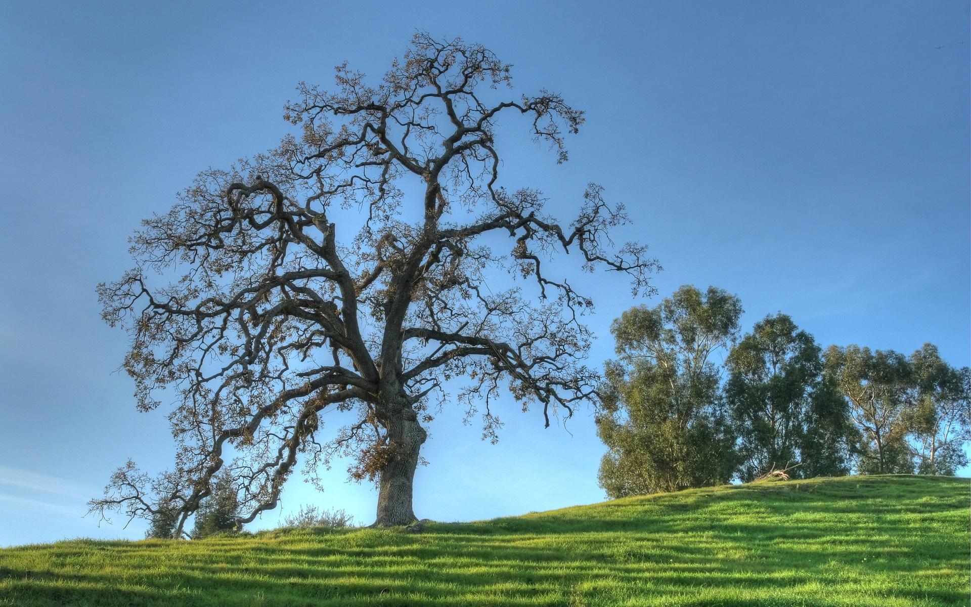 Oak Trees in Winter 1920x1200 Wallpaper 1920x1200