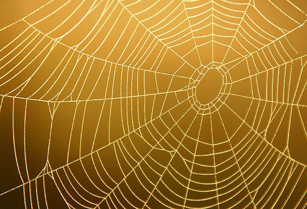 Spider Web Background Spider Web on Plain Background 620x423