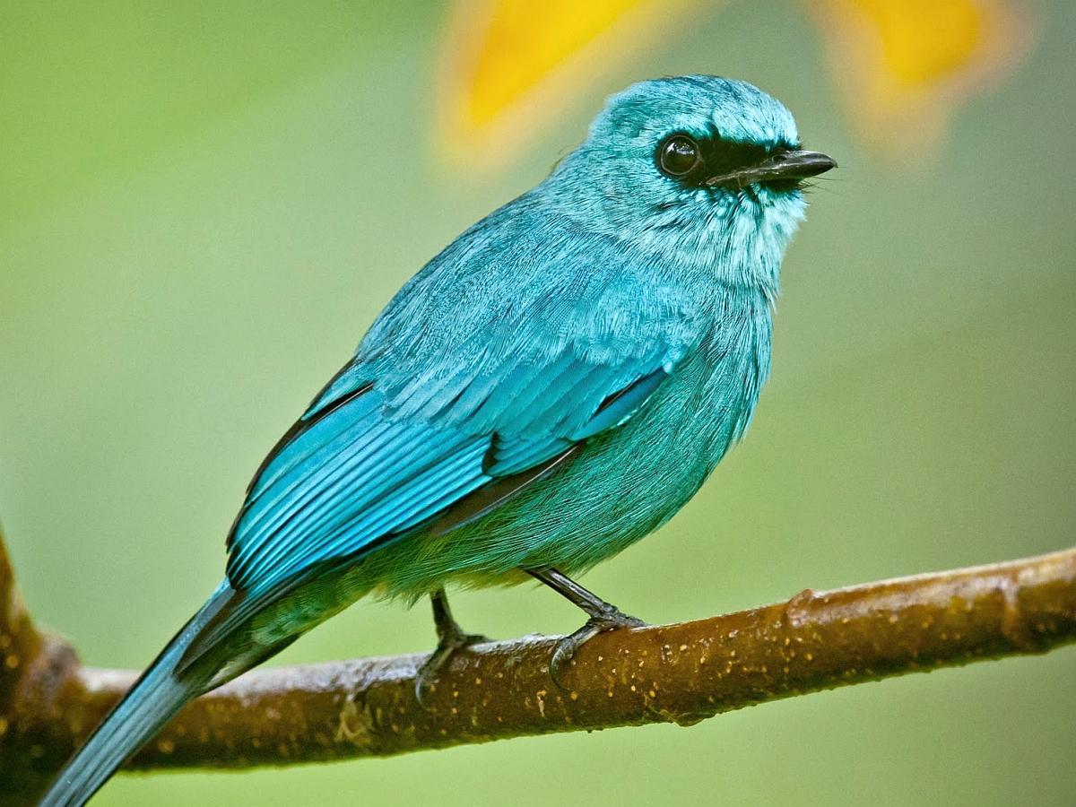 BLUE BIRD WALLPAPER   75002   HD Wallpapers   [WallpapersInHQcom] 1200x900