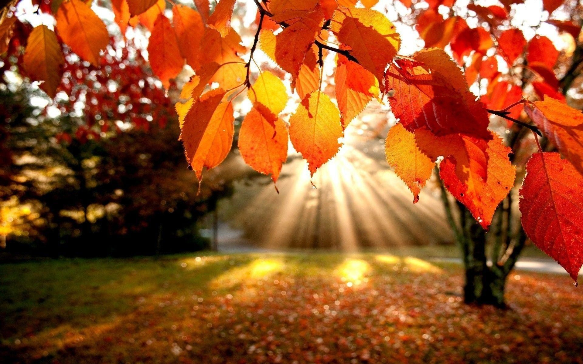 Fall Laptop Wallpapers   Top Fall Laptop Backgrounds 1920x1200