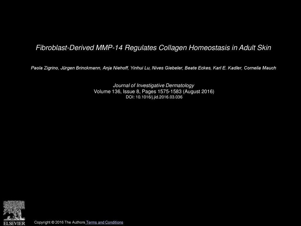 Fibroblast Derived MMP 14 Regulates Collagen Homeostasis in Adult 1024x768