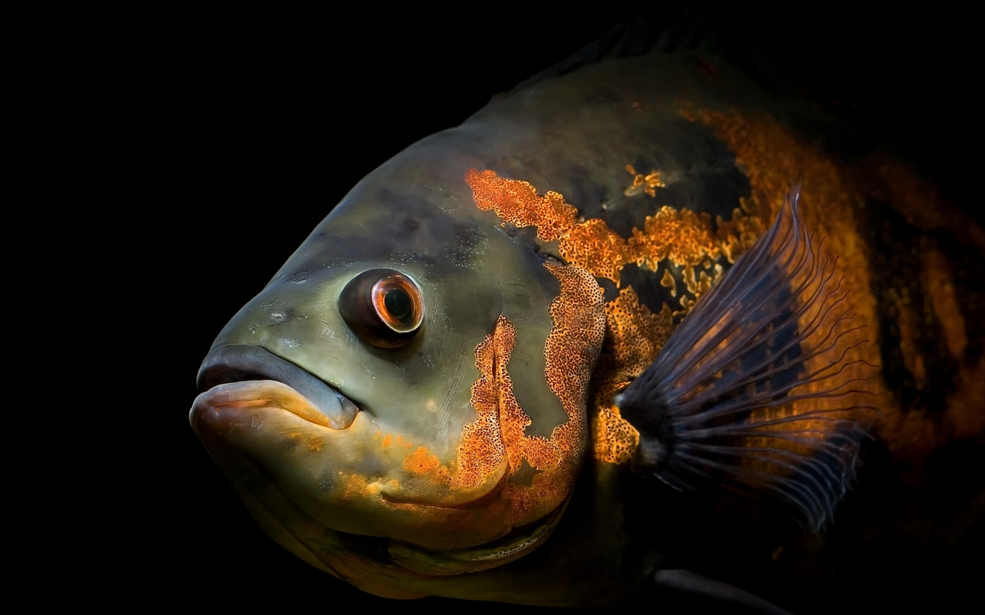 Collection Sea Creatures Wallpaper Weird