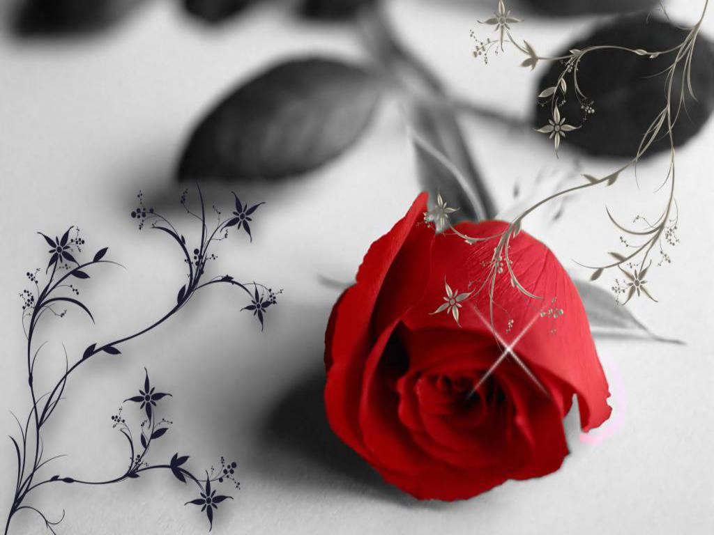 Valentine flowers wallpaper wallpapersafari flower photos valentines day rose dhlflorist Image collections