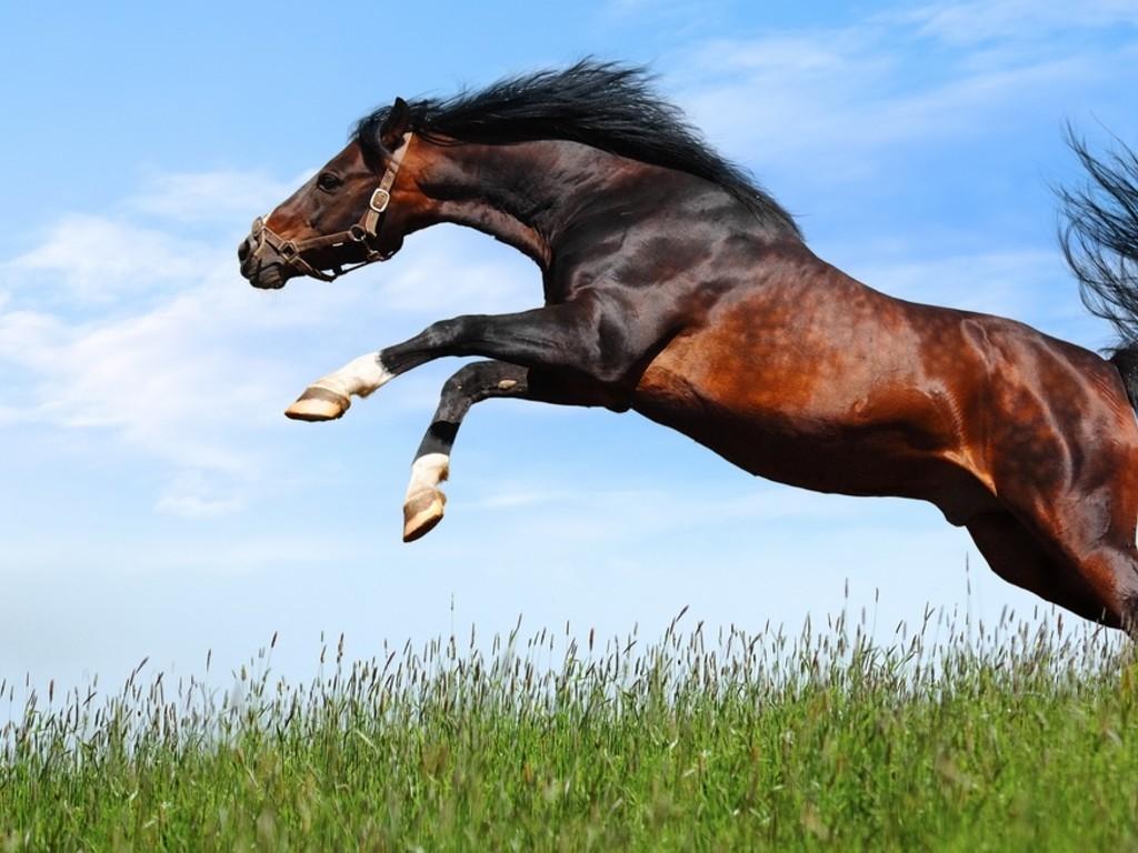 грузовые лошадь в прыжке картинка последствии они