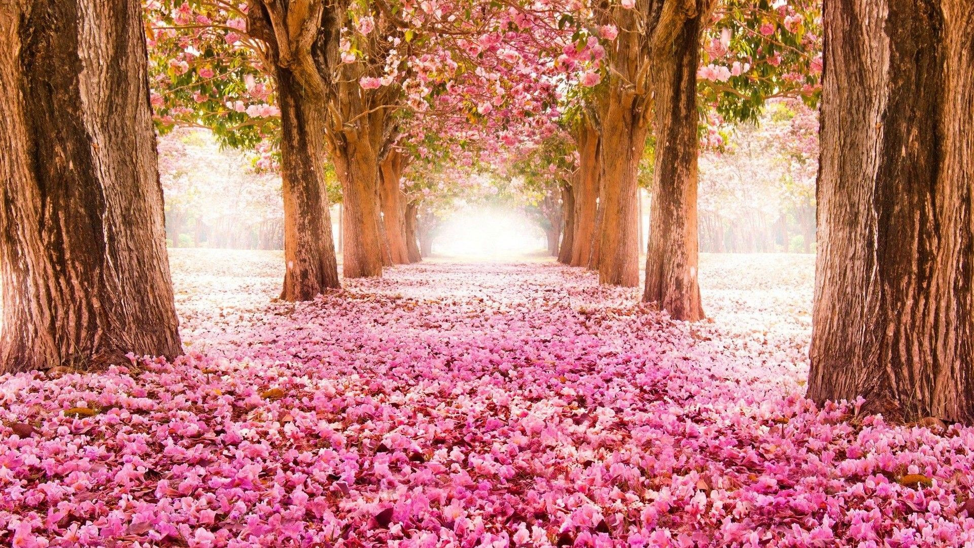 40 Spring PC Wallpapers   Download at WallpaperBro 1920x1080