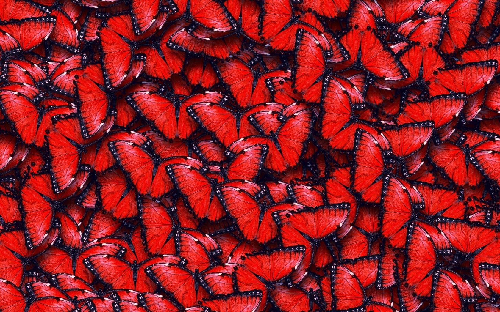 Red Butterfly Wallpaper - WallpaperSafari