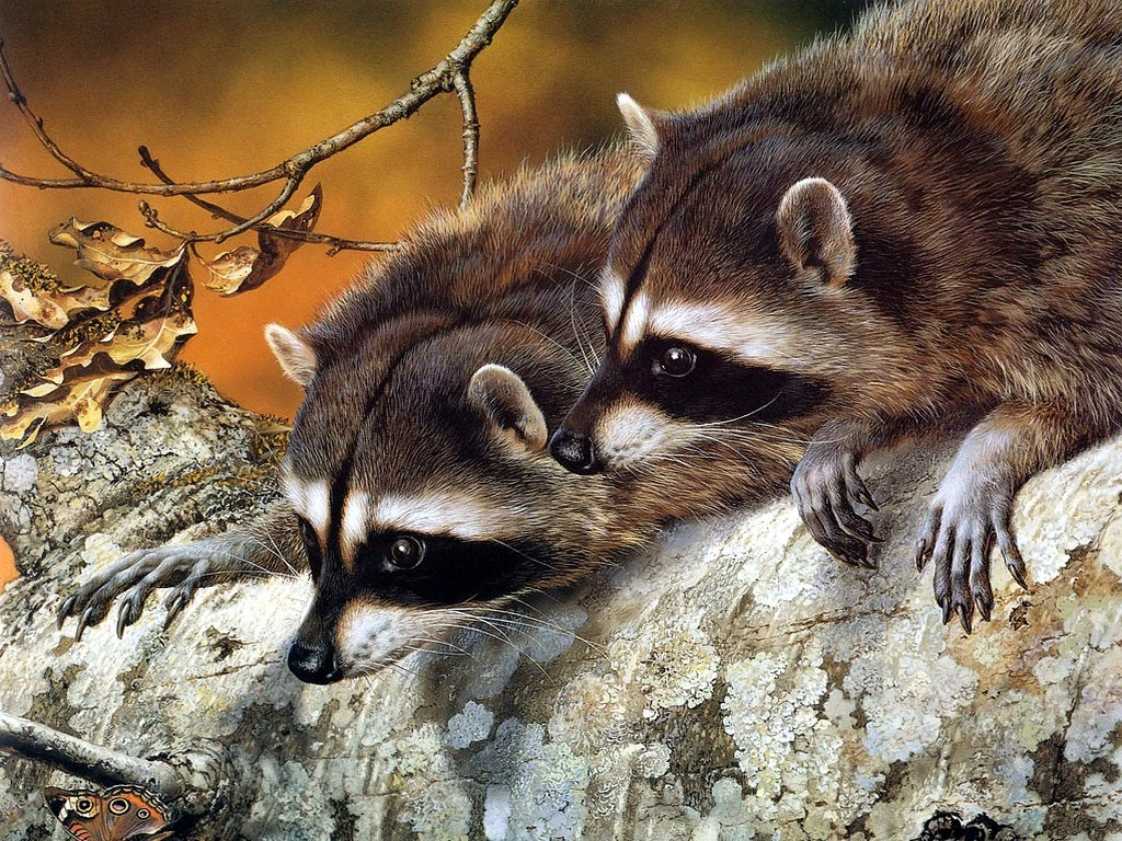 Desktop Wallpapers Backgrounds Animals Wallpapers 1024x768