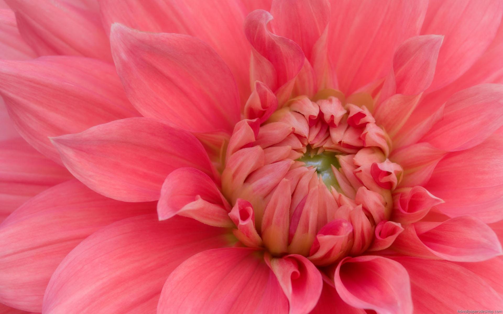 HD Flower Wallpapers Widescreen