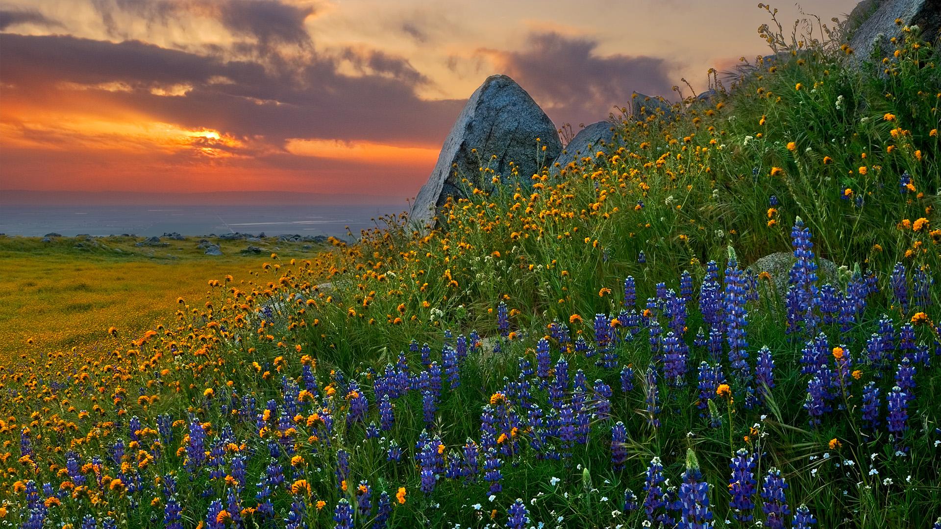 Landscape Wallpapers   Twilight Field Of Flowers Hd Wallpapers 1920x1080