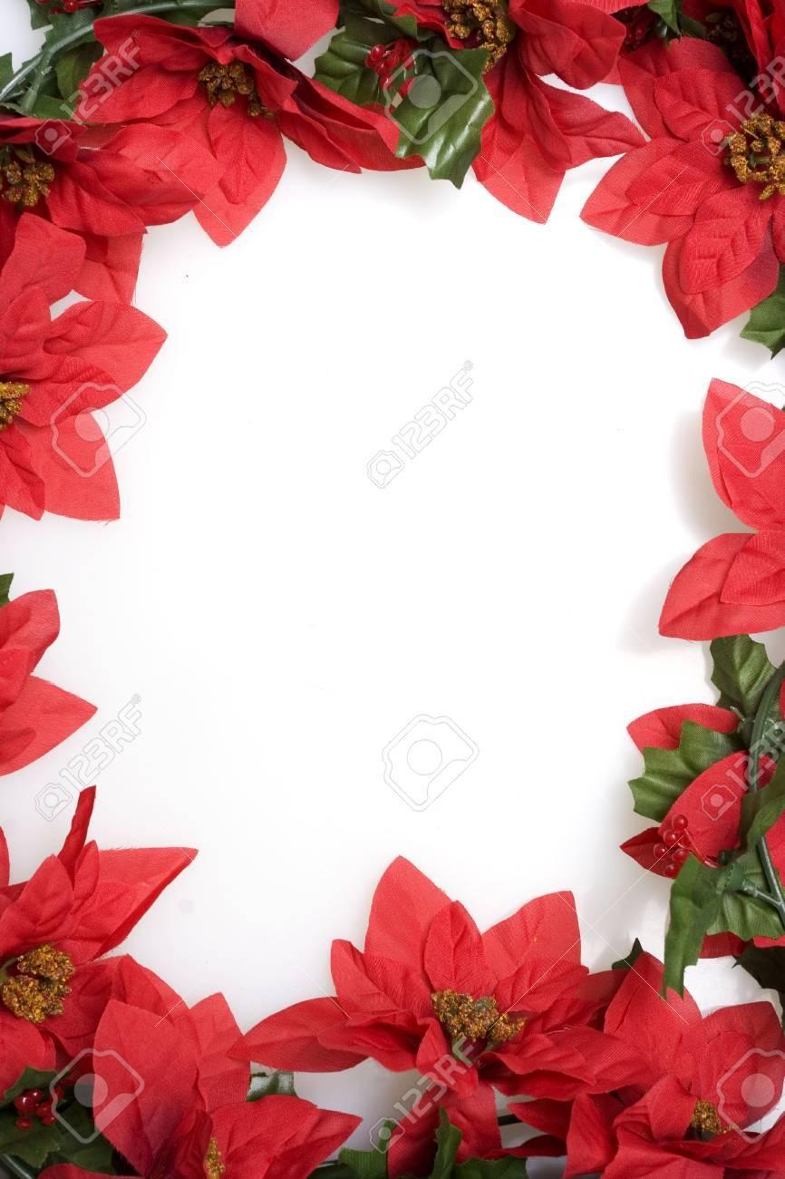 Christmas Red Poinsettias Background Over White Stock Photo 866x1300
