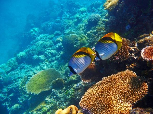 43 ocean reef wallpaper on wallpapersafari - Great barrier reef desktop background ...