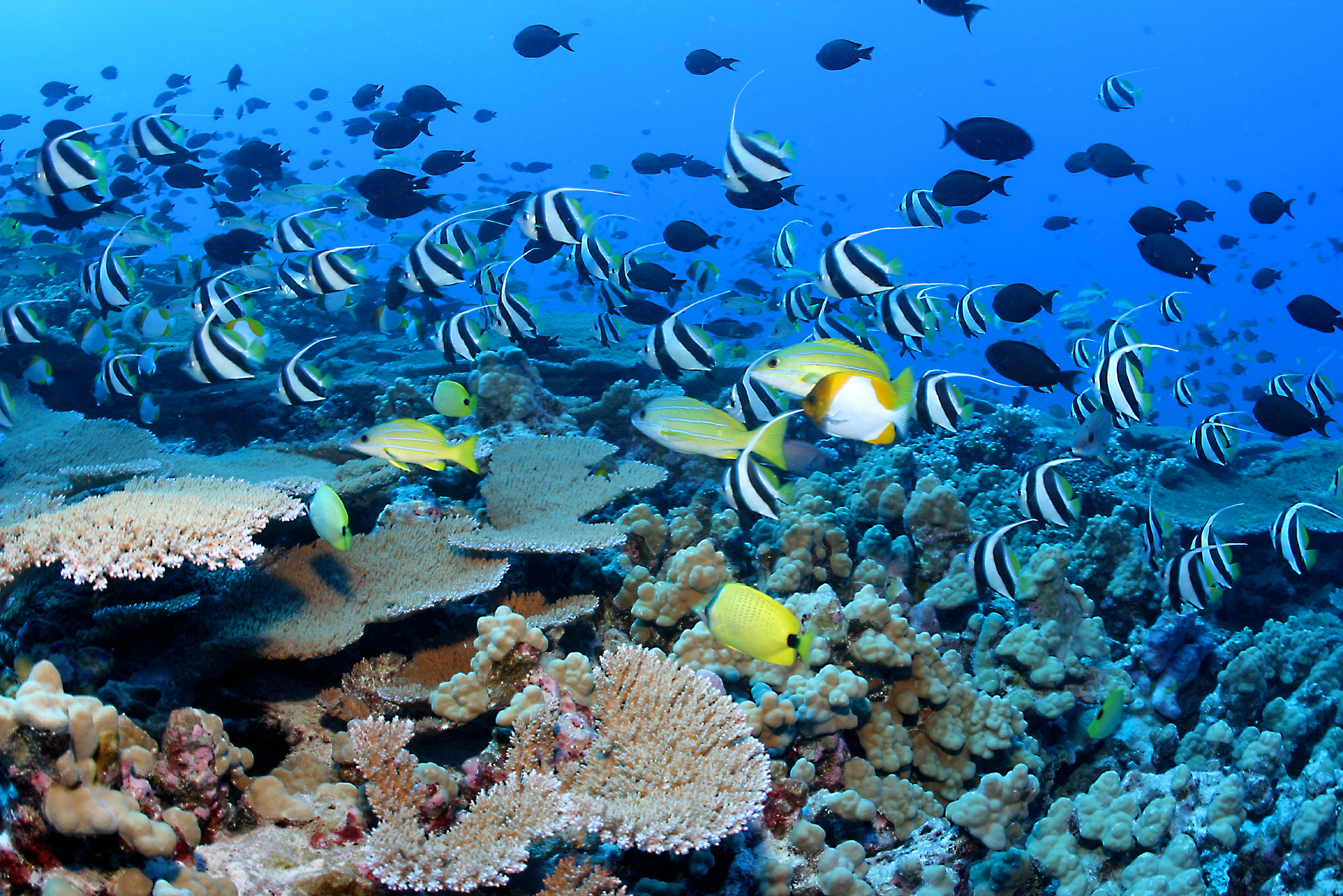 Reef Fishes Wallpaper HD wallpapers   Coral Reef Fishes Wallpaper 3000x2001