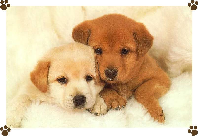 Puppies Wallpaper Desktop 36 Desktop Wallpaper 803x551