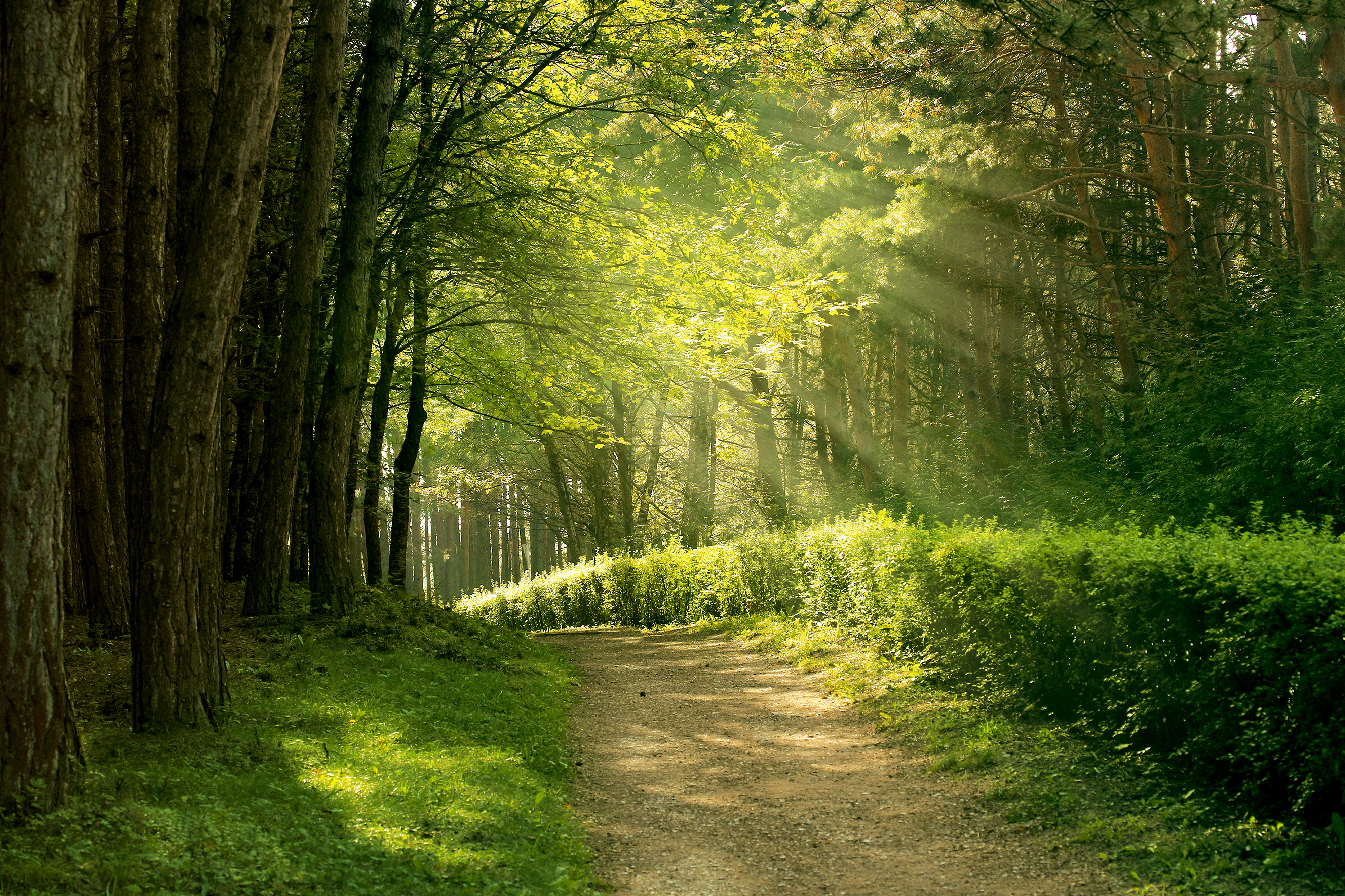 Trail in the Park Background Gallery Yopriceville   High 4000x2666