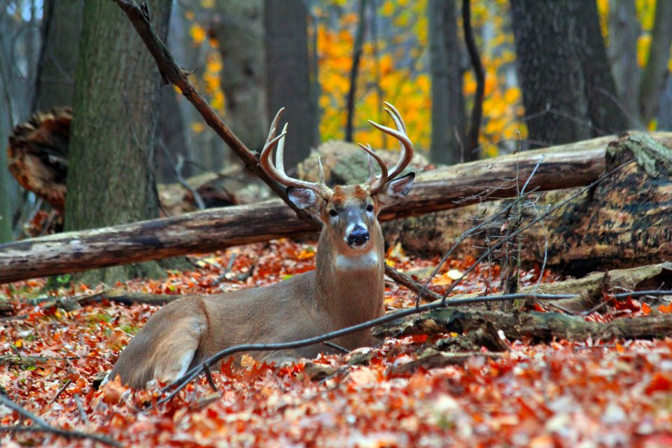 45 walleye screensavers and wallpapers on wallpapersafari - Free deer hunting screensavers ...