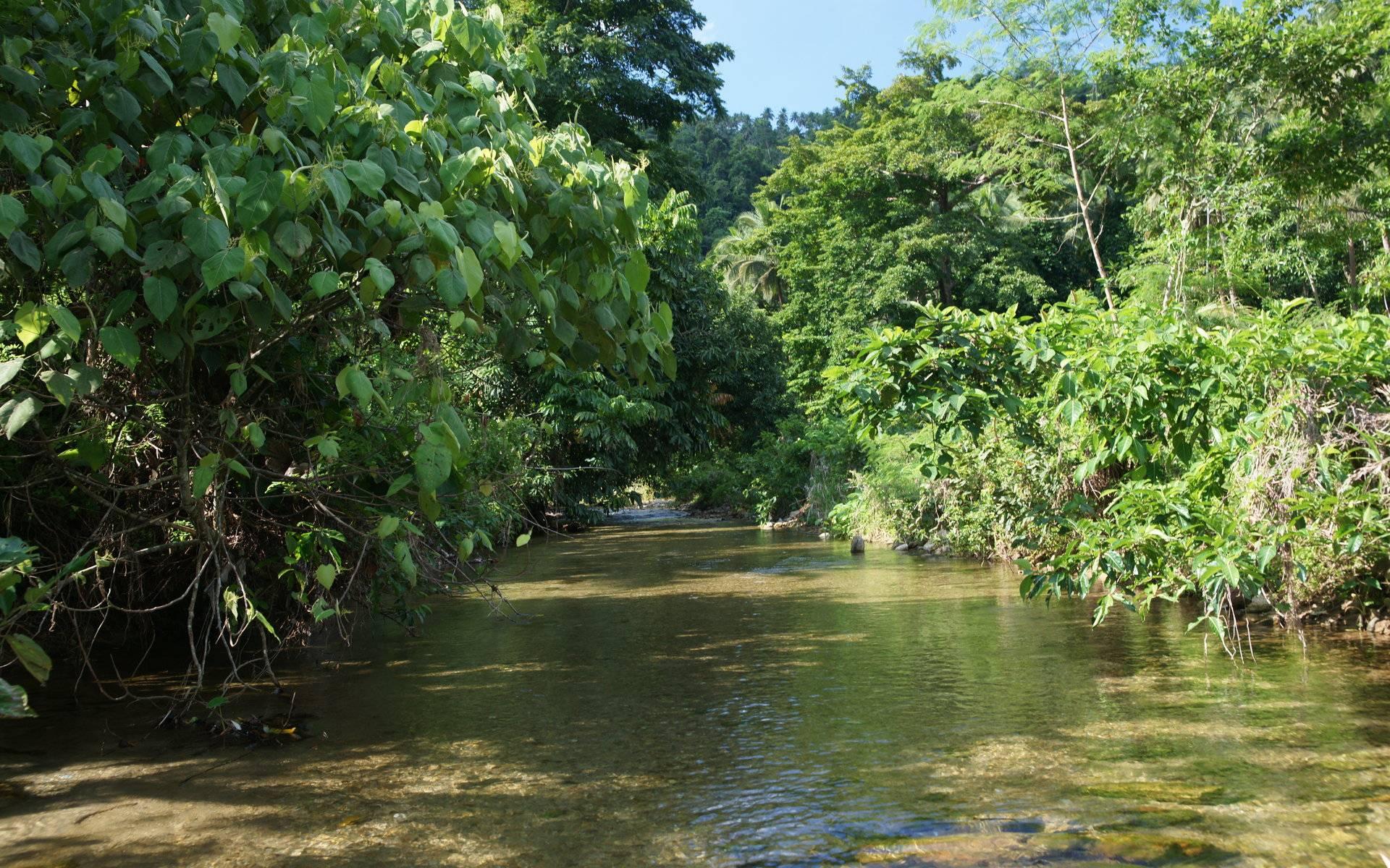 Jungle Vegetation Scenery Background Nature River desktop wallpapers 1920x1200