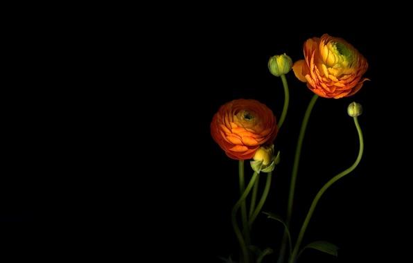Wallpaper petals stem bud light shadow wallpapers flowers 596x380