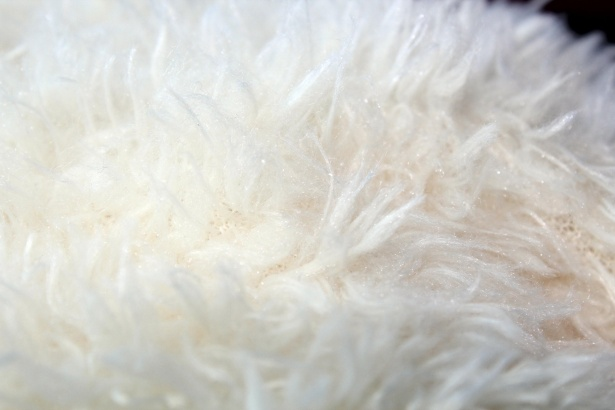White Fur Background 3 Stock Photo   Public Domain Pictures 615x410