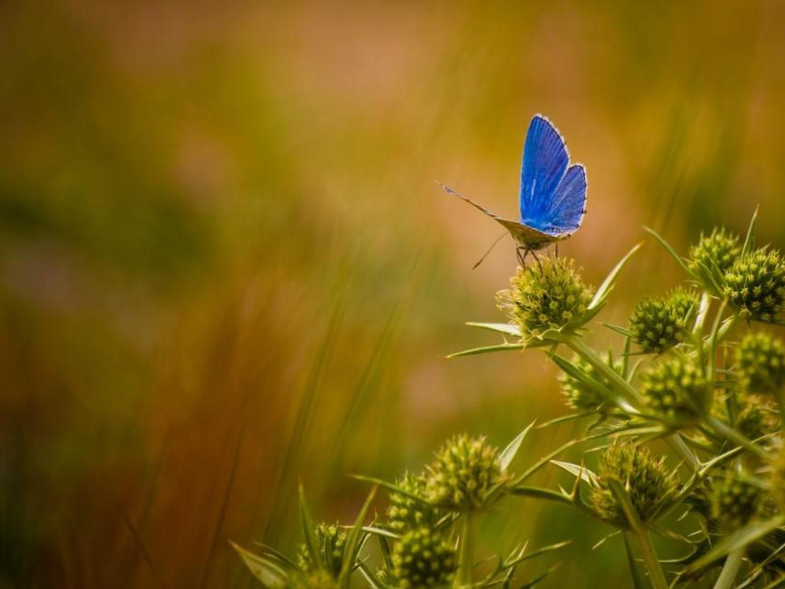 Beautiful Butterflies   Butterflies Wallpaper 9481698 1600x1200