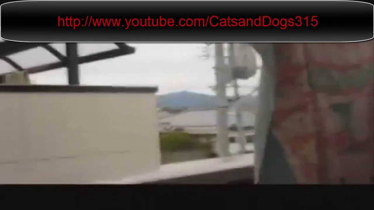 Epic Funny Cat Fails 2 Background Wallpaper 1280x720