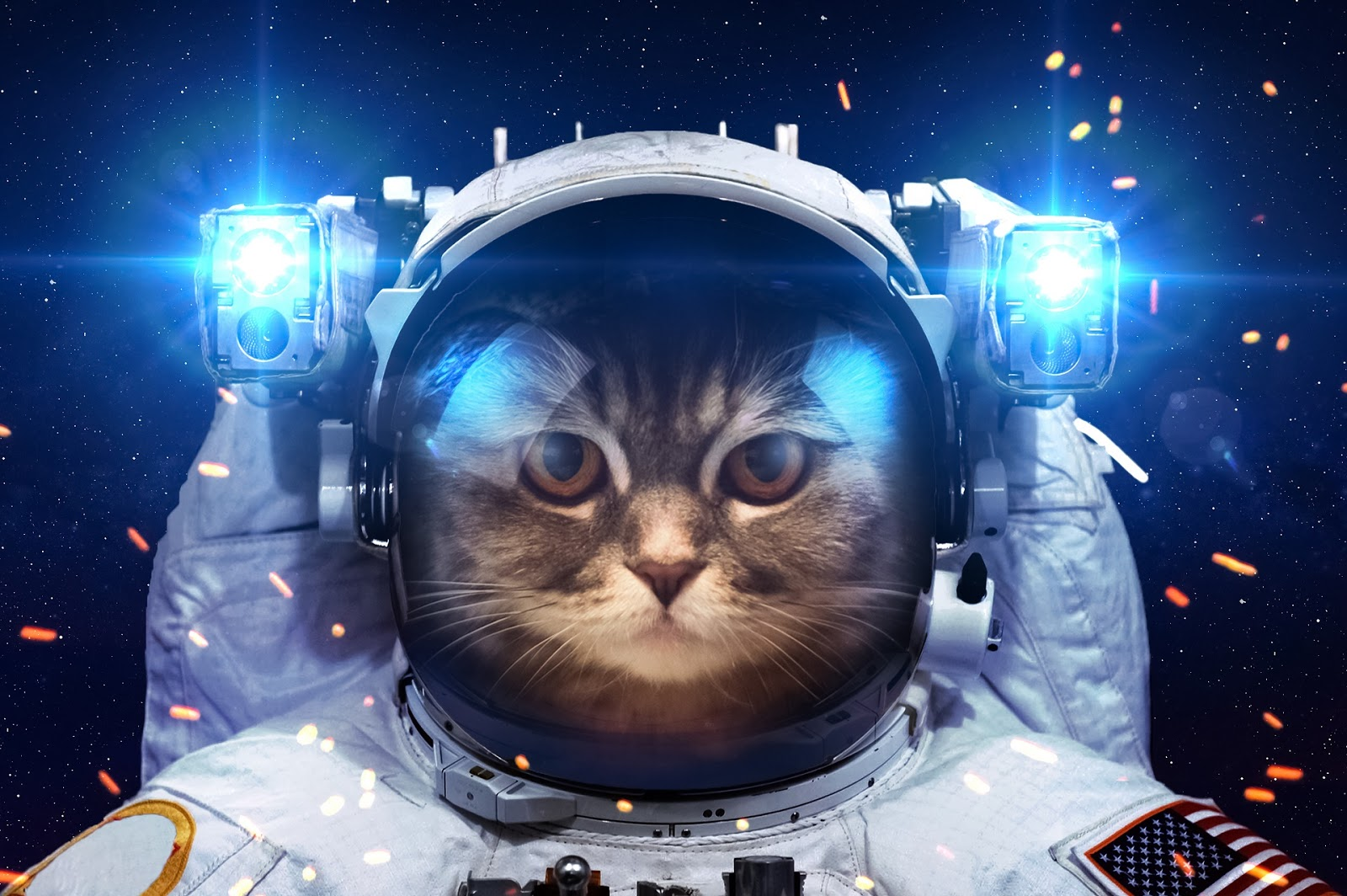 funny cat dressed up in astronaut space suit image HD wallpaperjpg 1600x1064
