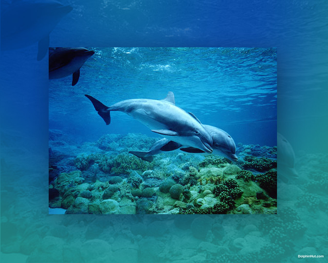 Download Dolphin Wallpaper   Animals Wallpapers 1280x1024