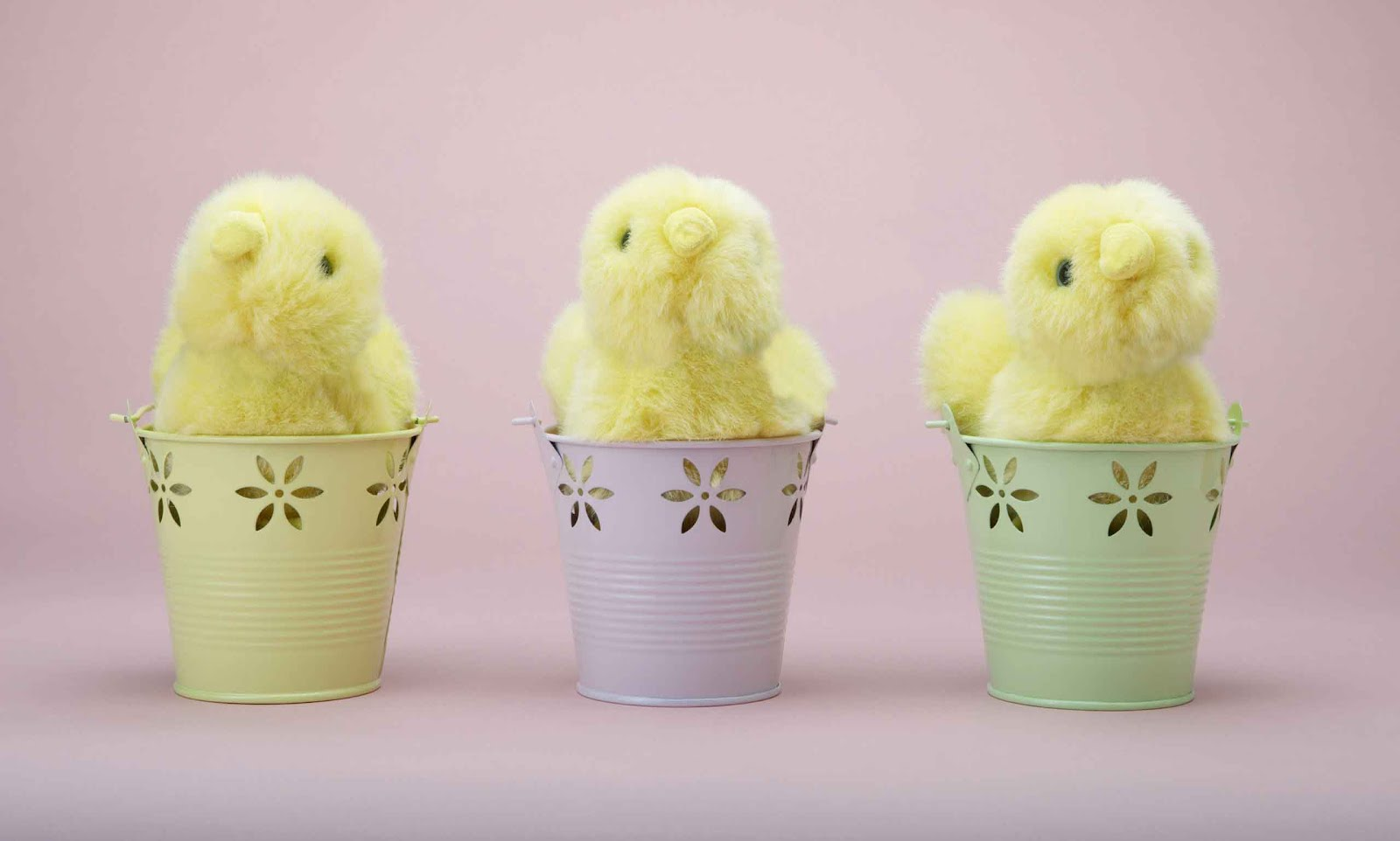 Cute Easter Chicks Wallpapers Cool Christian Wallpapers 1600x962