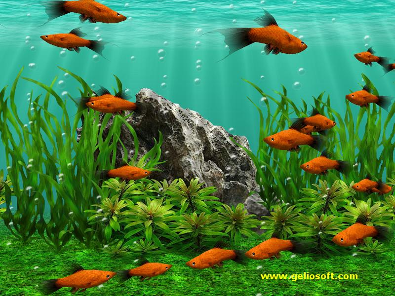 3d fish school screensaver free download