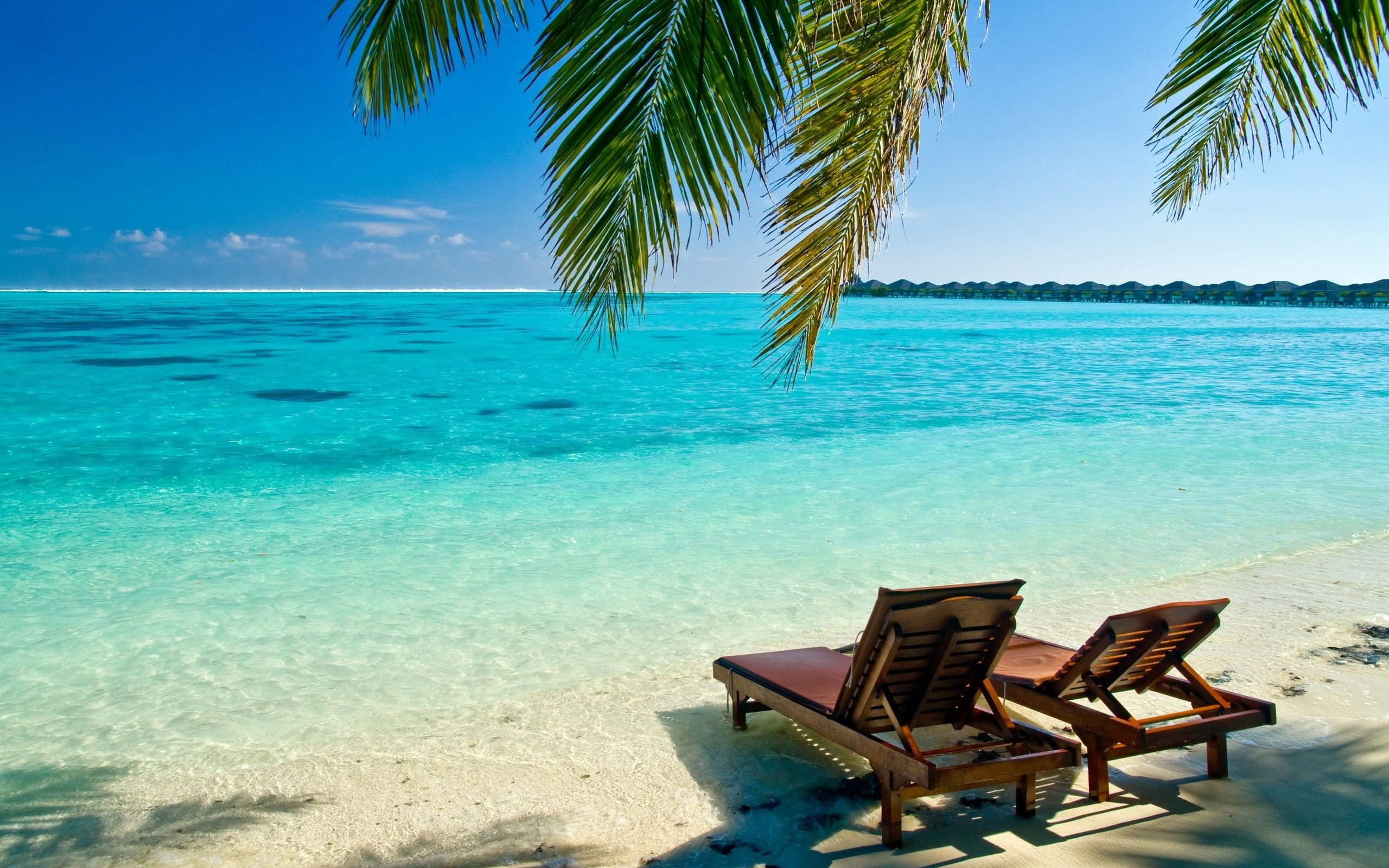 Ocean Beach Wallpaper 2560x1600 Ocean Beach Maldives Indian Palm 2560x1600