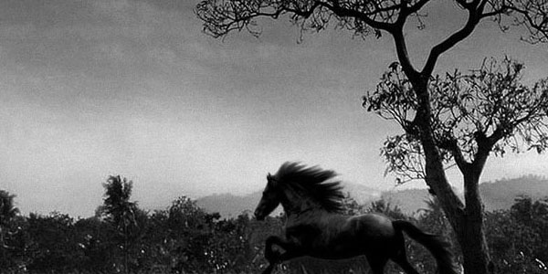 horse wallpaper 70 Useful Black And White Backgrounds 600x300