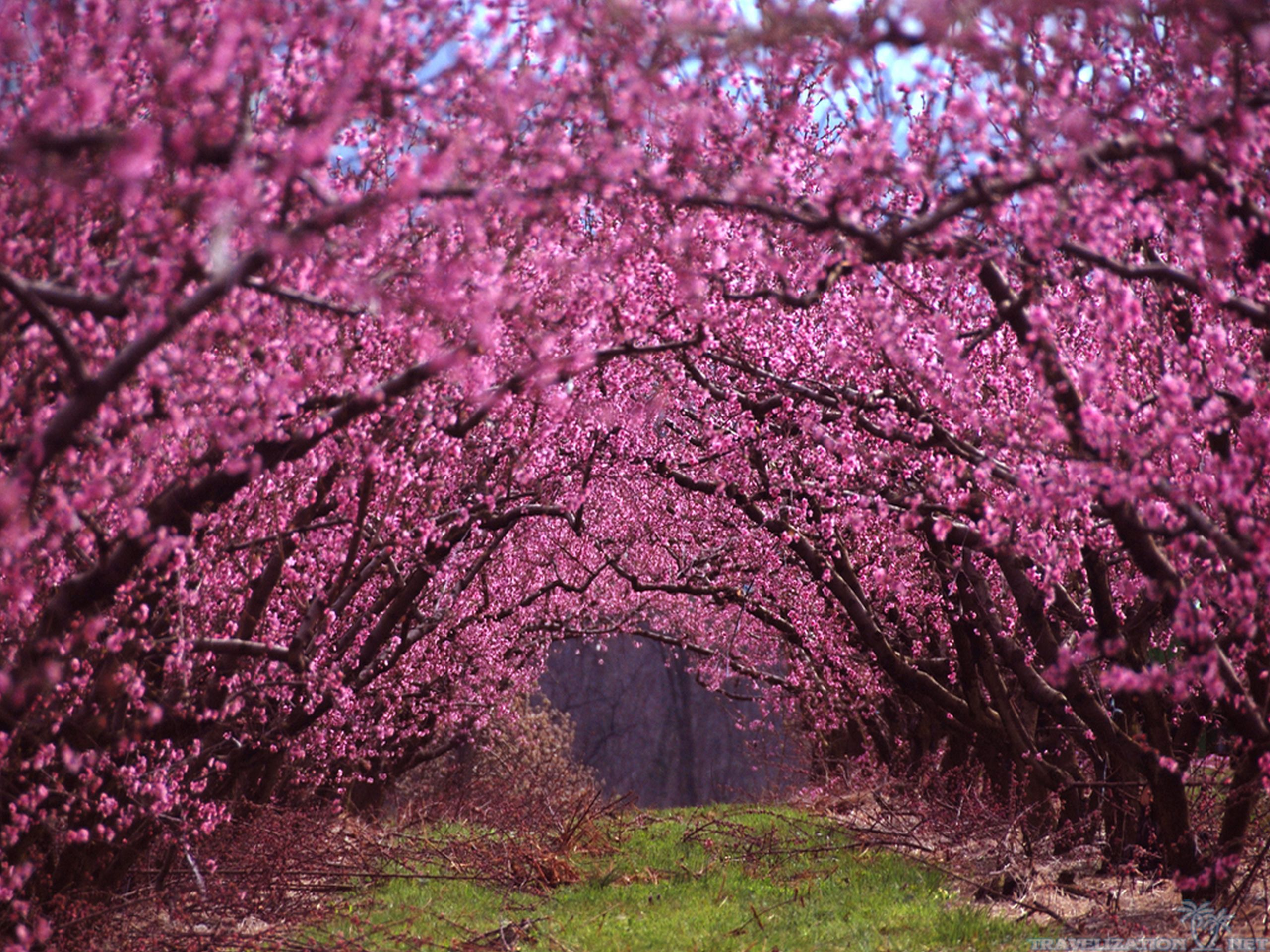 35 Beautiful Spring Pictures And Wallpapers: Beautiful Spring Scenery Wallpapers