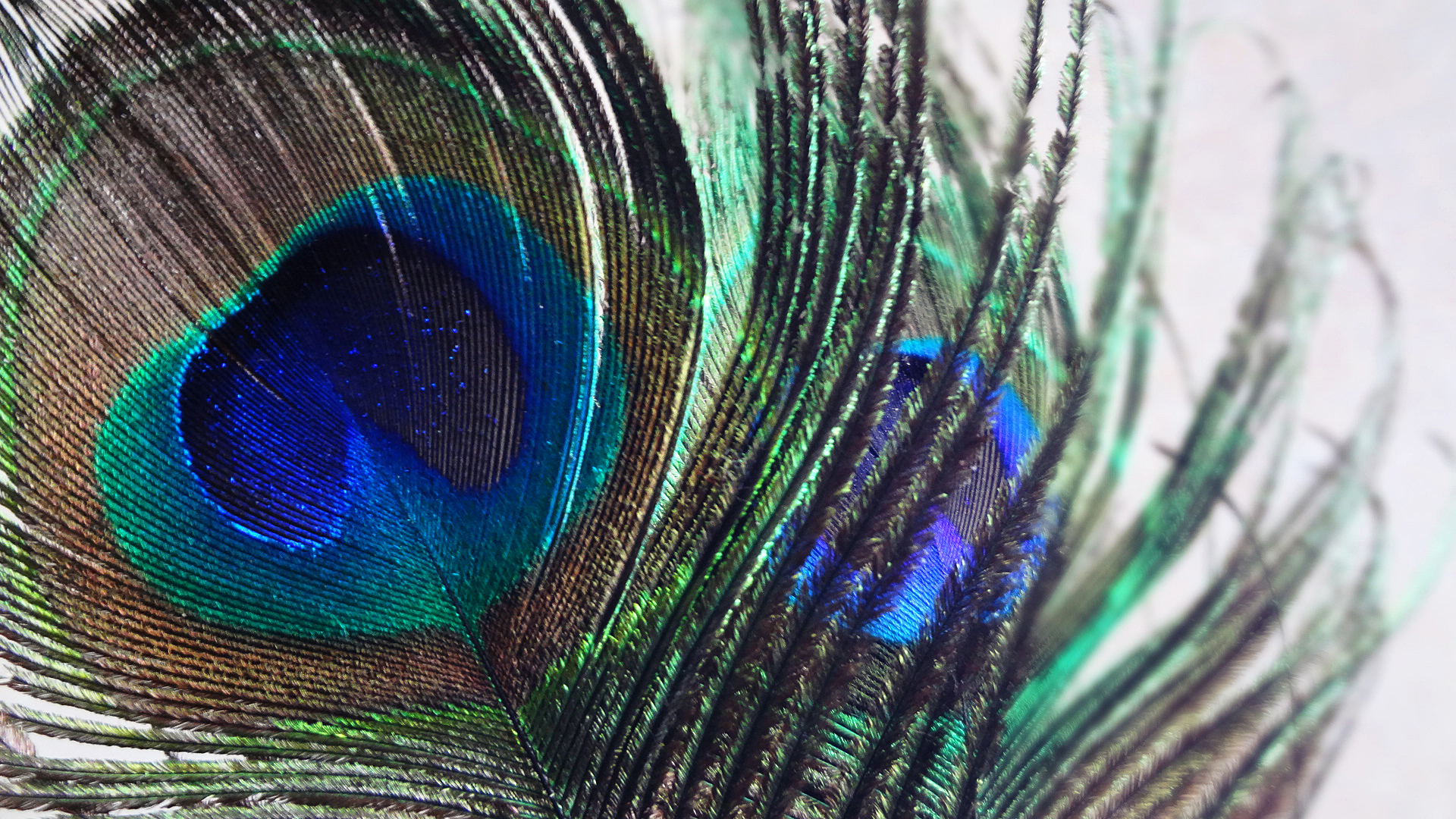 Feather Wallpaper Download Desktop Peacock Hd 1920x1080