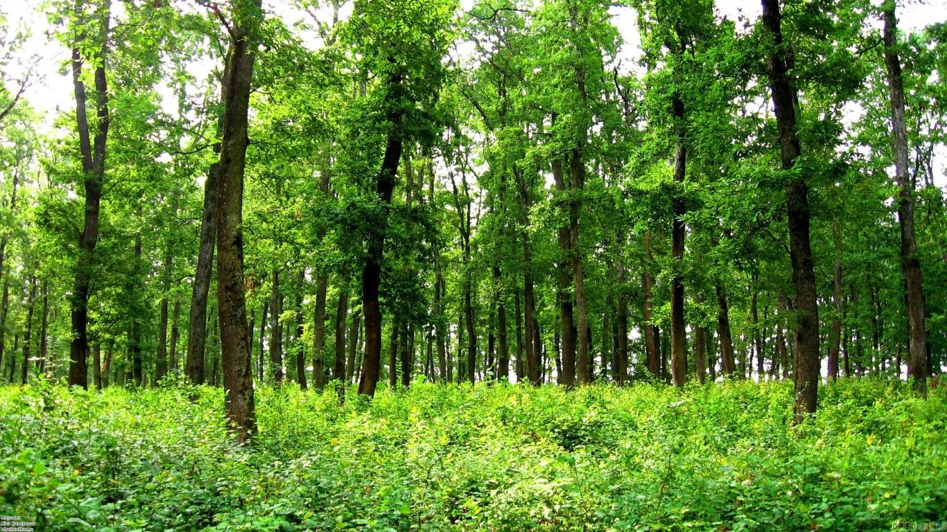 Green forest wallpaper 23592 open walls ImgStockscom 1366x768