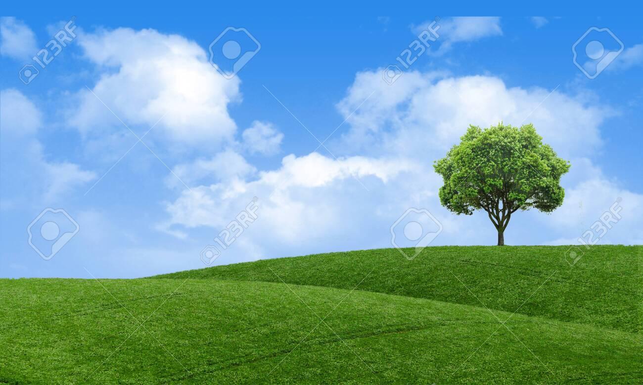 Green Summer Landscape Scenic View Wallpaper Beautiful Wallpaper 1300x780
