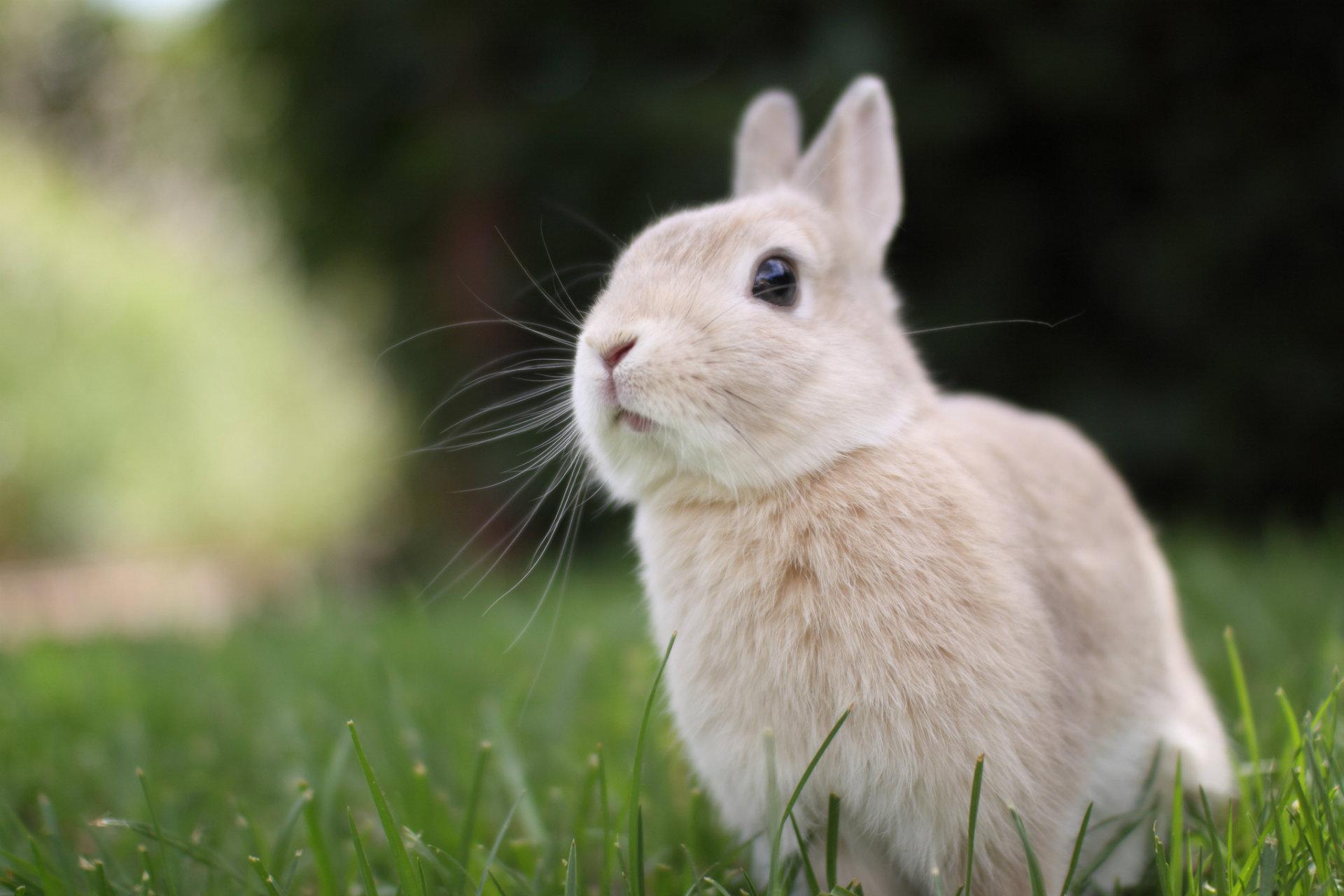 Cute White Rabbit Wallpapers For Desktop: Cute Bunny Wallpaper