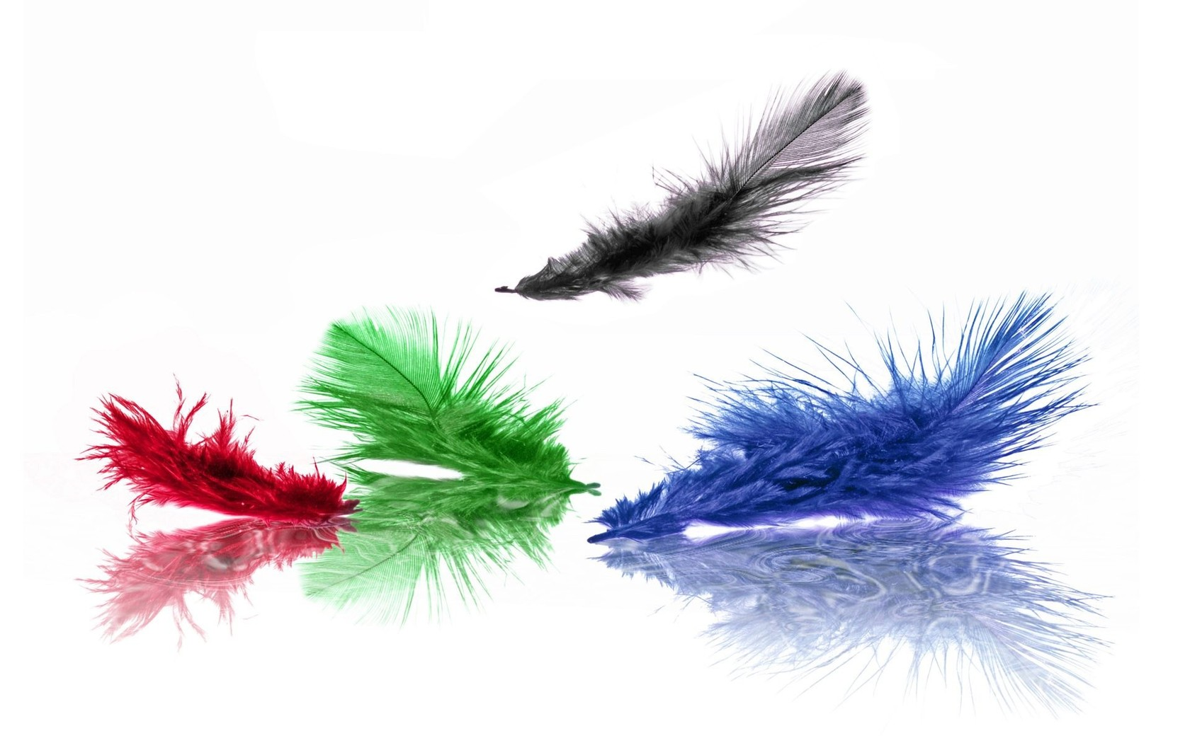 Colorful feathers wallpaper 8644 1680x1050