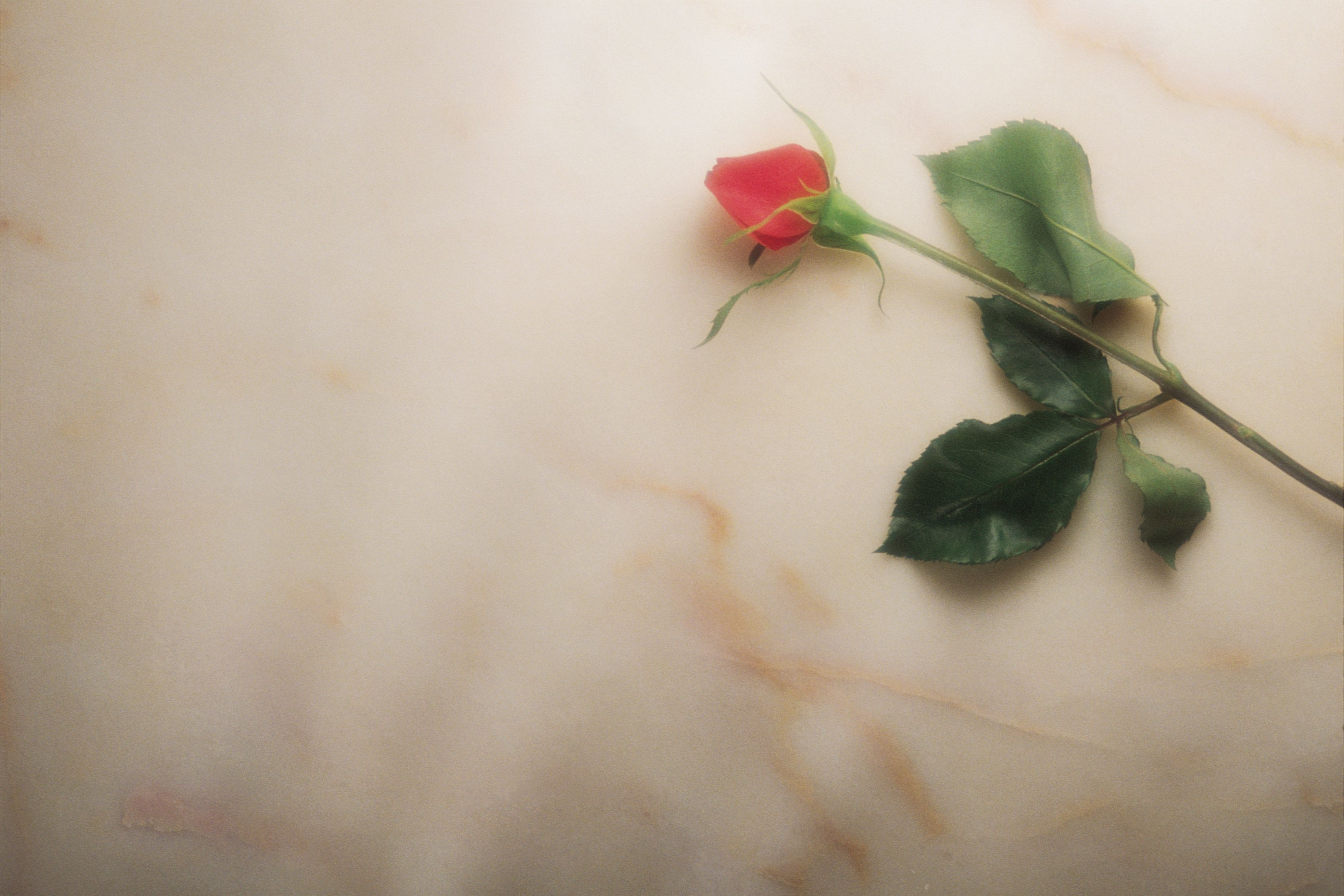 Funeral Background submited images 3300x2200