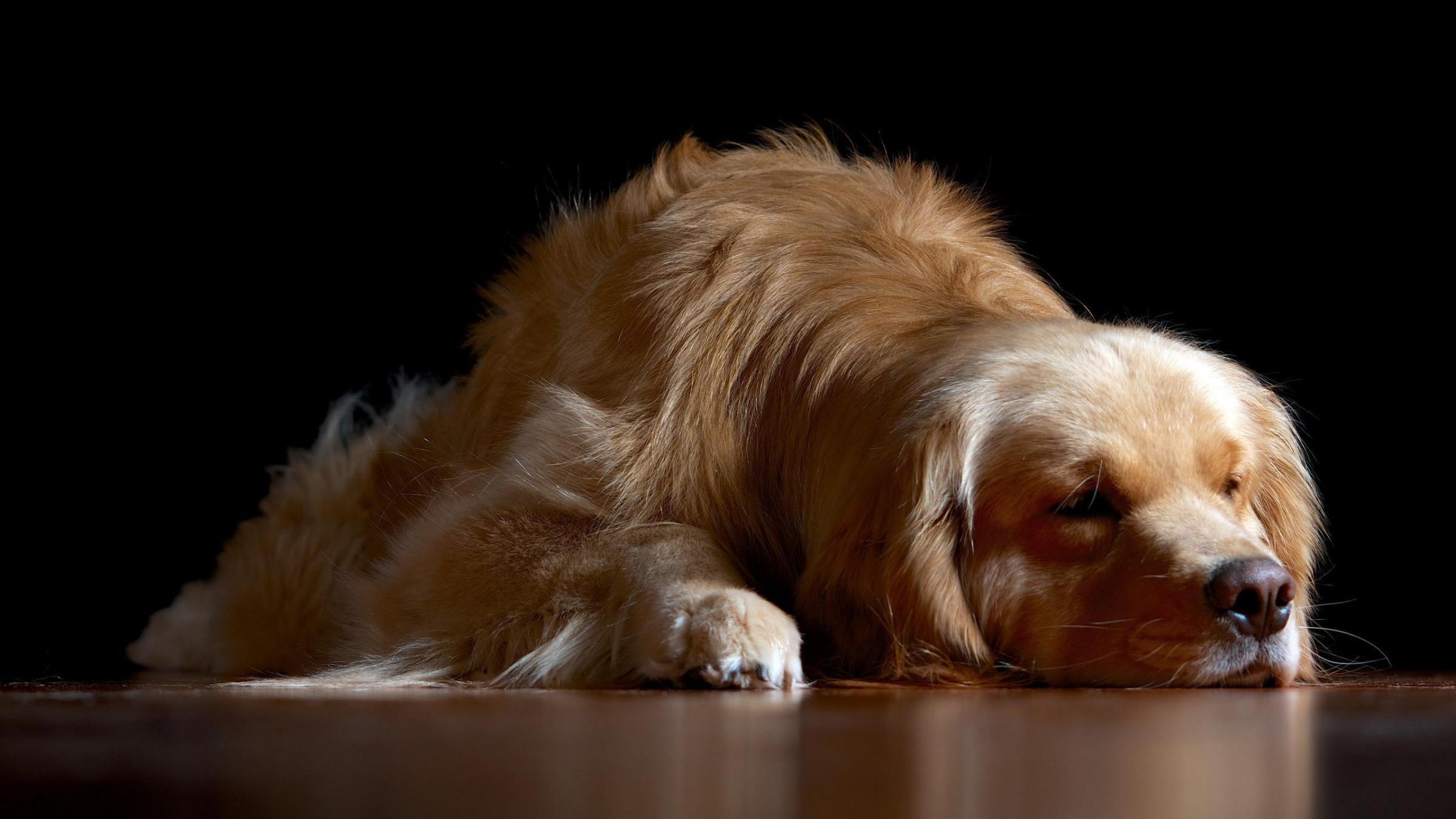 Sleeping Dog HD desktop wallpaper Widescreen High 2400x1350