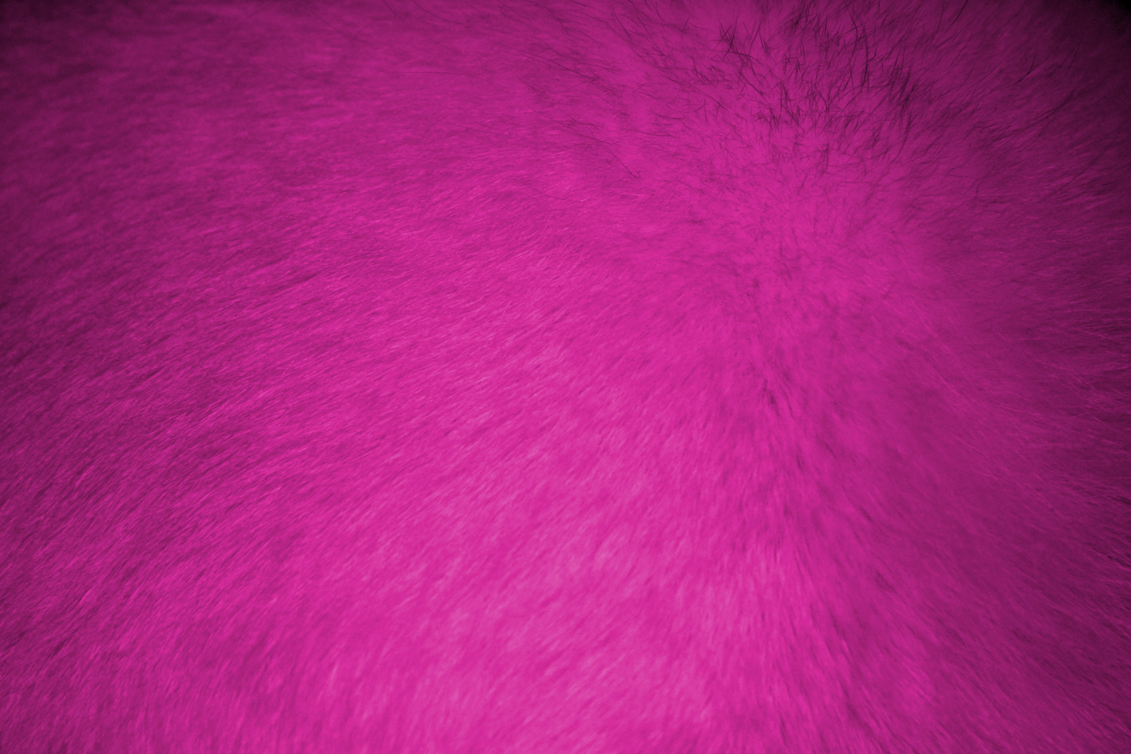 Hot Pink Fur Texture   High Resolution Photo   Dimensions 3888 3888x2592
