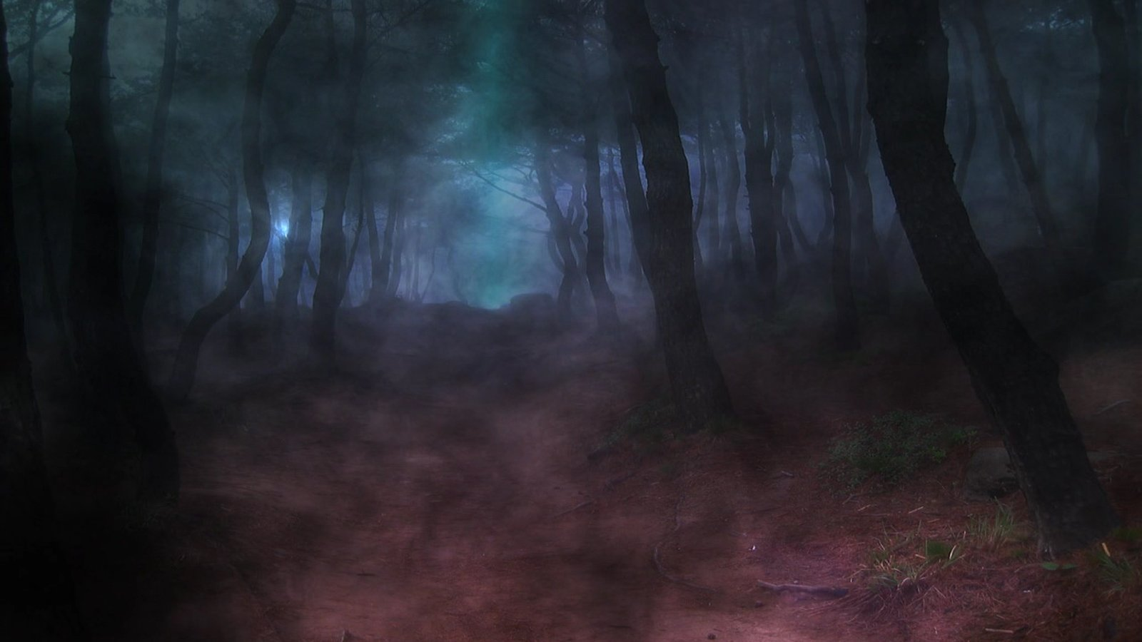 Animated Dark Forest Backgrounds Animated Dark 1600x900