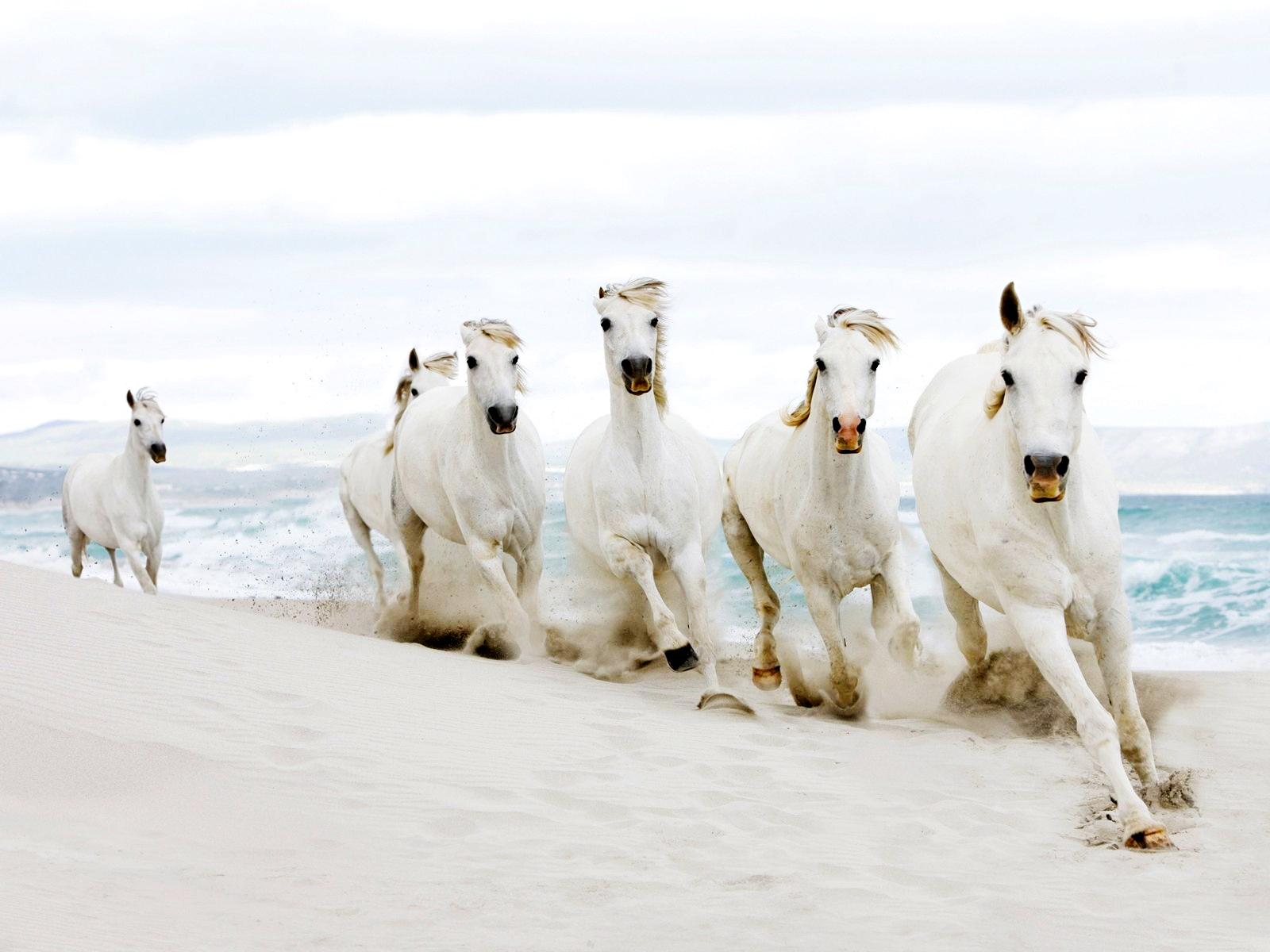 33 White Horse Running On Beach Wallpapers On Wallpapersafari