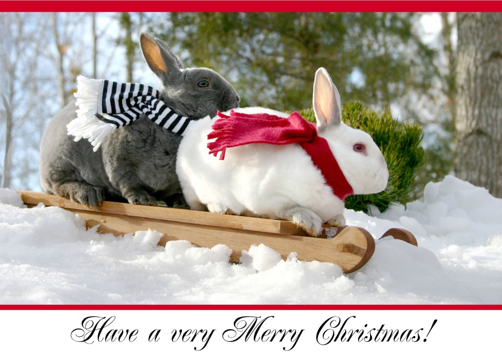 Rabbit Christmas Cards