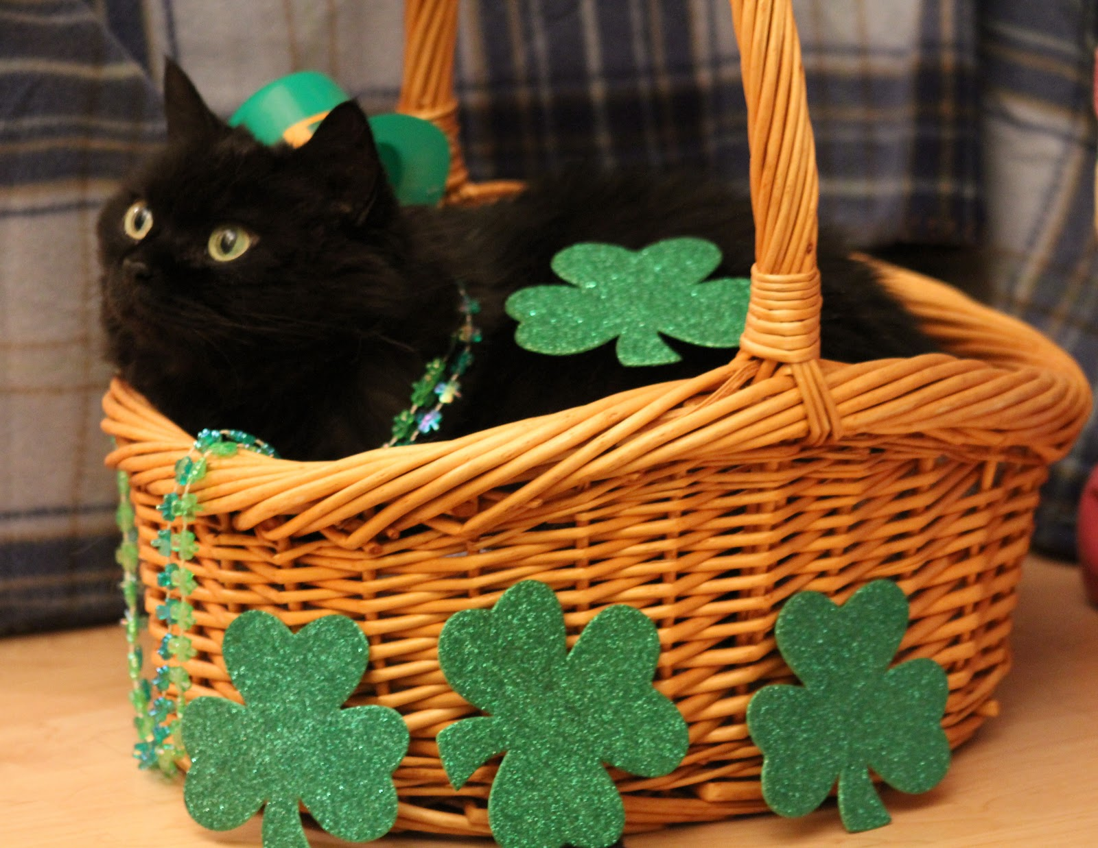 St Patricks Day Cat Wallpaper 364SI4Ejpg   Picseriocom 1600x1237