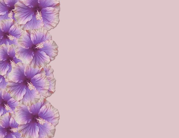Hibiscus Border 4 Border of hibiscus flowers with plenty of copyspace 600x463
