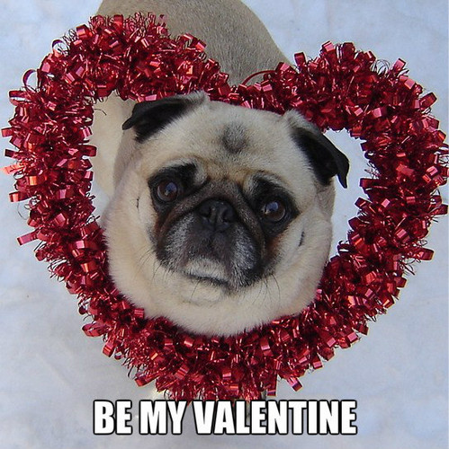 Pug Valentine   Animal Humor Fan Art 33480796 499x500