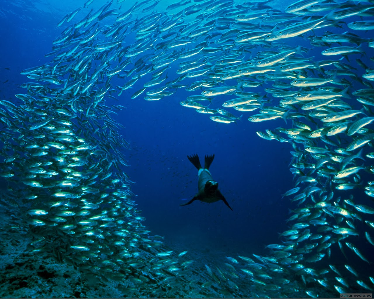 Ocean Life HD Funny Wallpapers Funny Wallpapers 1280x1024