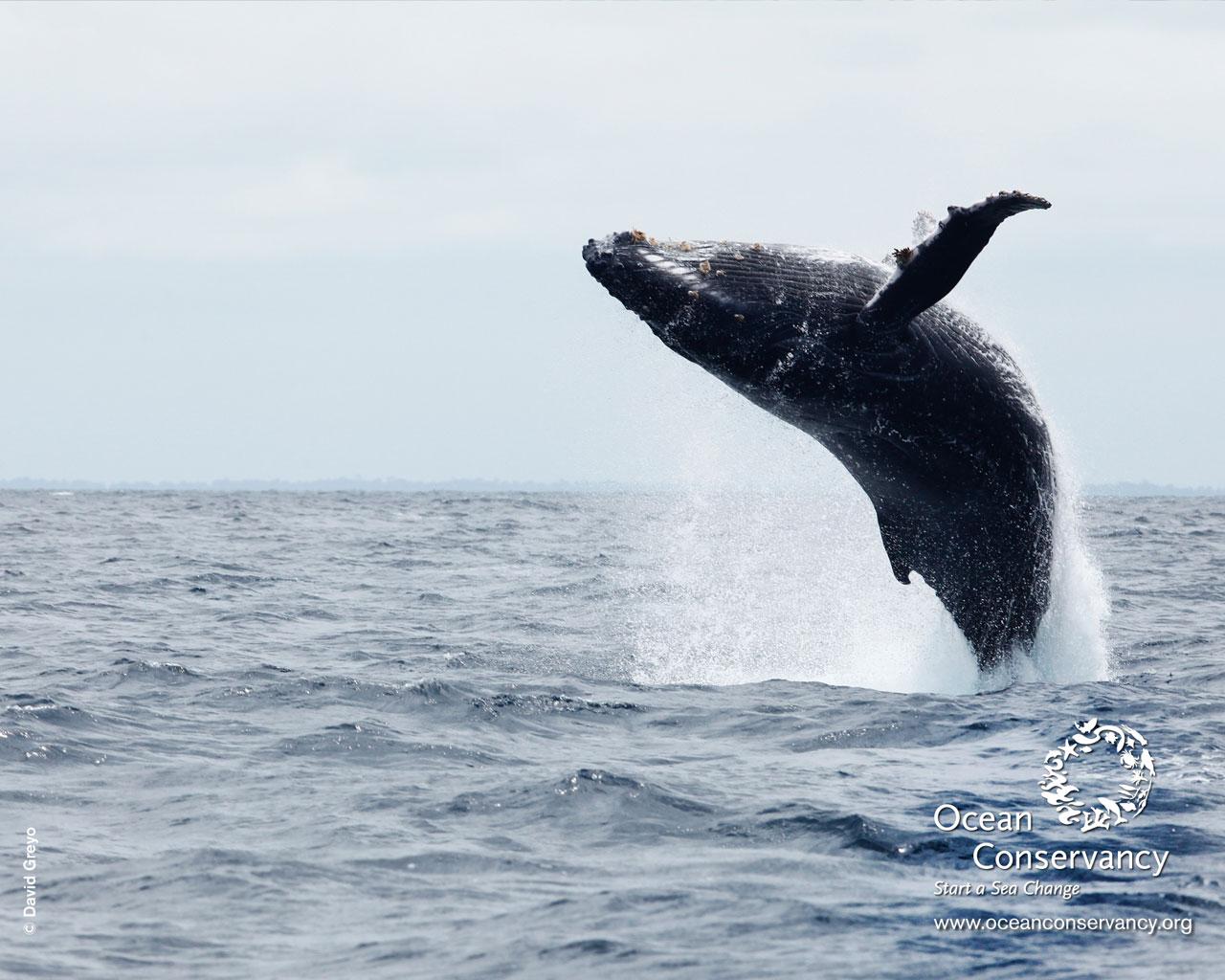 Ocean Conservancy Desktop Wallpaper 1280x1024
