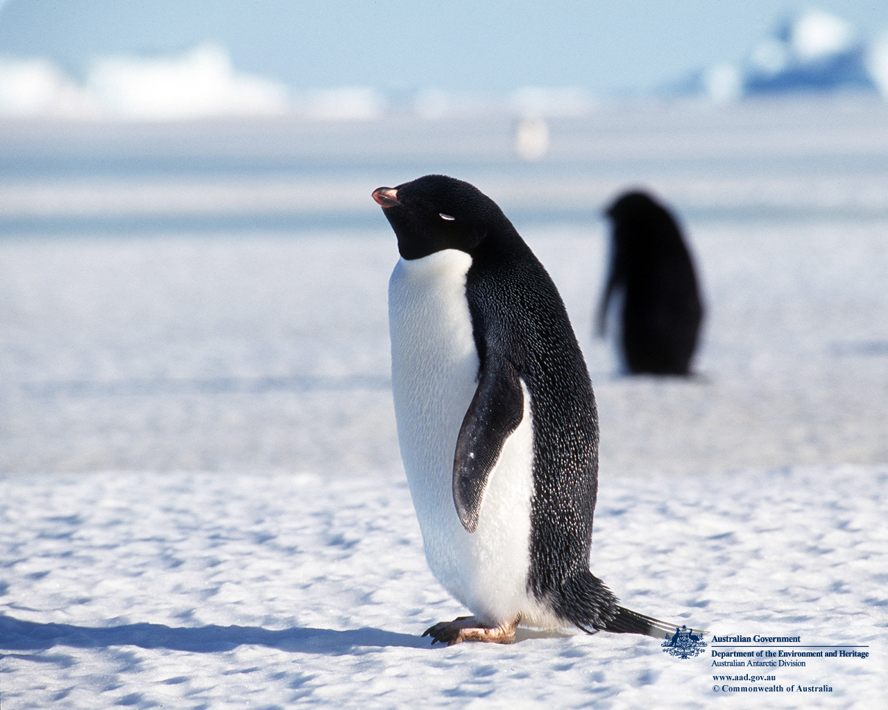 Penguins Cute Animals and Beautiful Photos 1280x1024