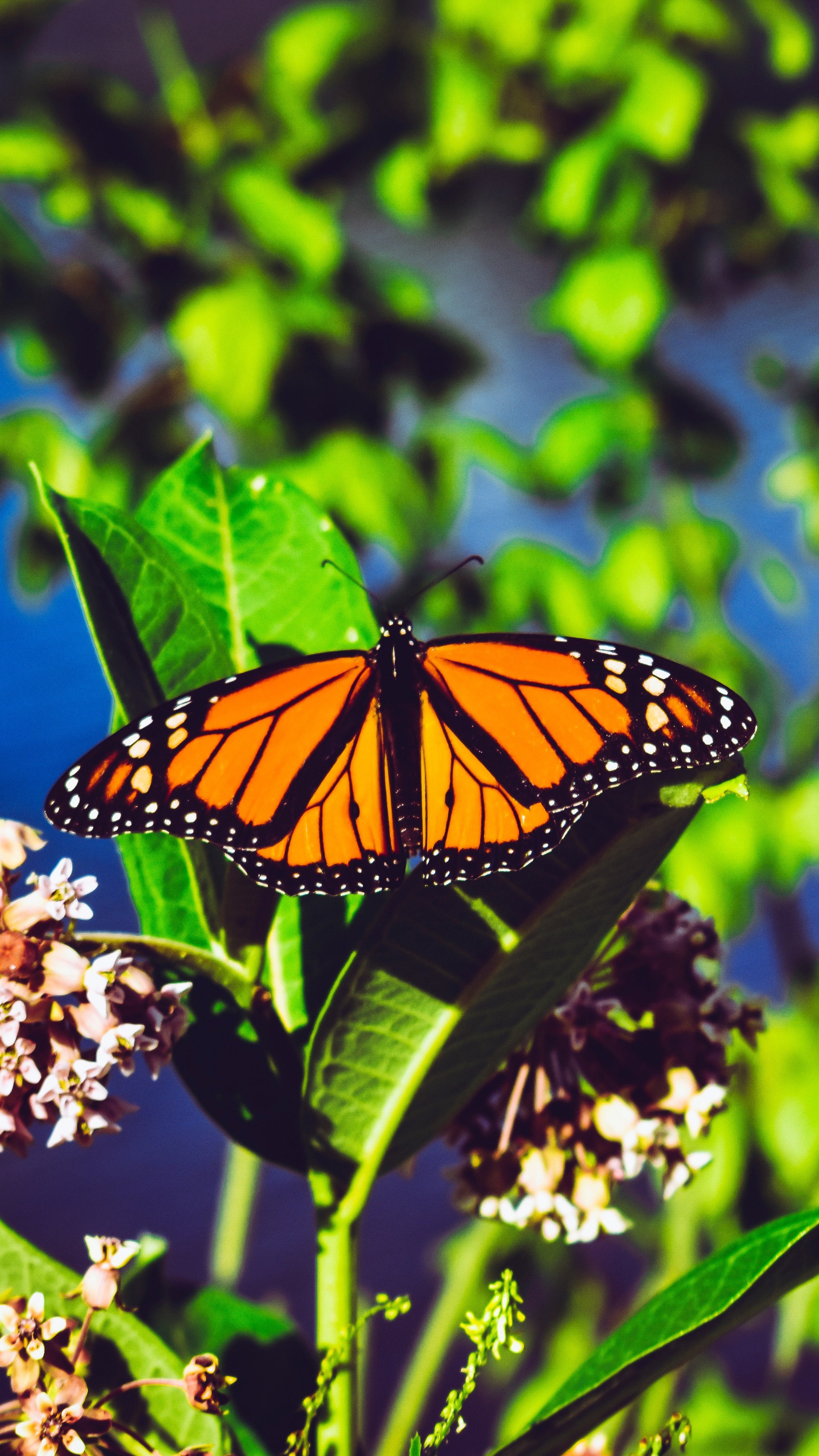 Download wallpaper 2160x3840 monarch butterfly butterfly bright 2160x3840