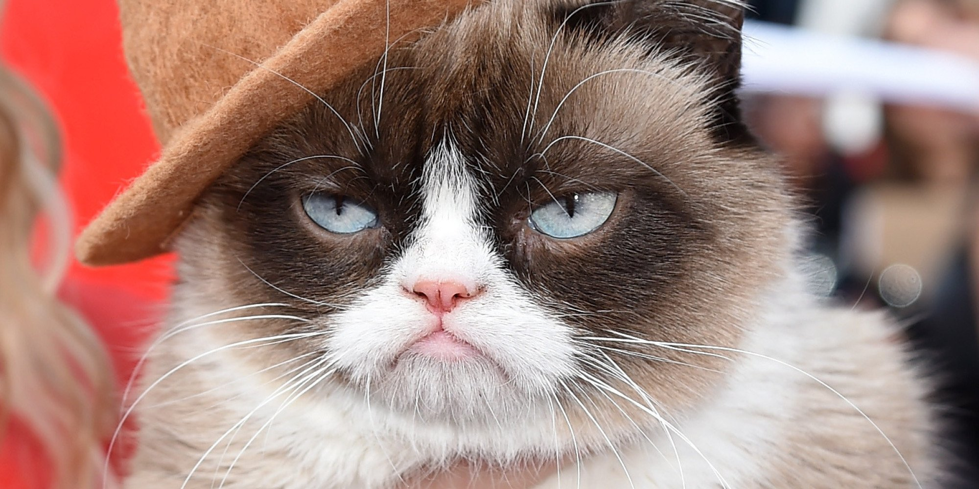 cat meme quote funny humor grumpy 51 wallpaper background 2000x1000